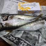 2011年2月大漁
