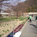 松山植木まつり
