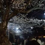 2011夜桜